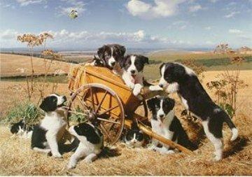 DogNames.ru - Клички для собаки с национальным колоритом