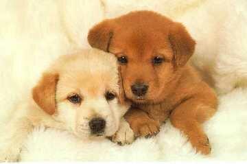 DogNames.ru - Выбор клички для собаки: 3 главных правила