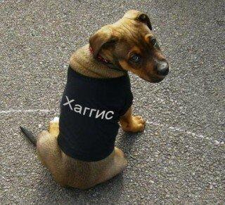 DogNames.ru - клички собак в честь ярких брендов