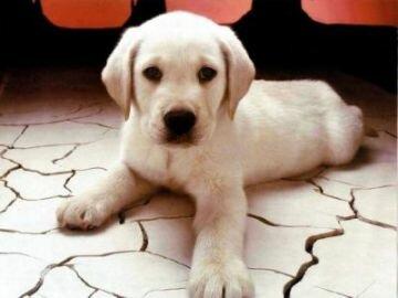DogNames.ru - оригинальная кличка щенку в честь цветов