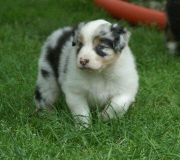 DogNames.ru - кличка щенку в честь великих полководцев