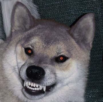 DogNames.ru - зловещие клички щенку