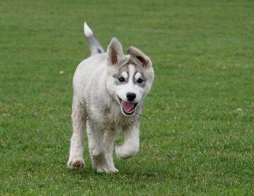 DogNames.ru - клички для собак лаек