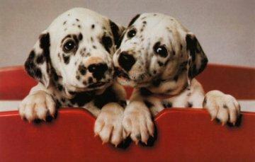 DogNames.ru - редкие клички для собак
