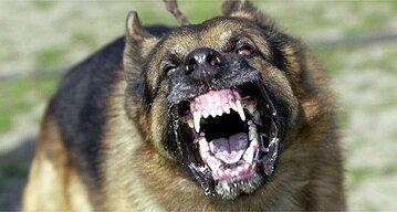 DogNames.ru - агрессивная кличка собаке