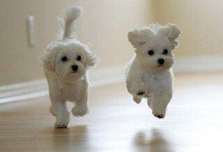 Dog Names редкие клички щенку